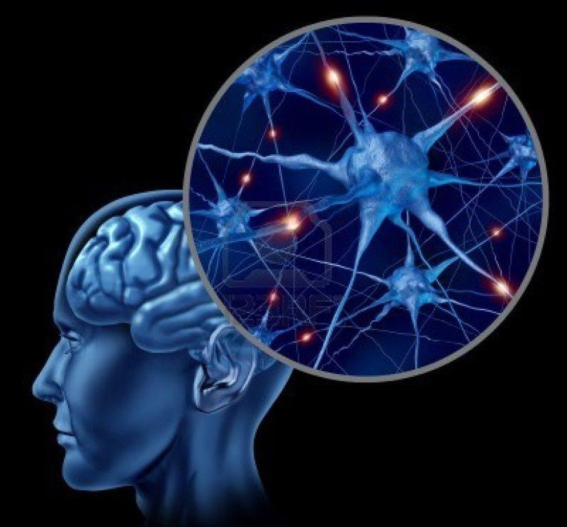 conexiones_cerebro